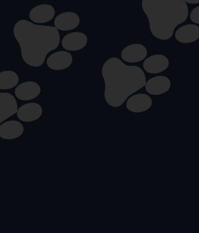 Scopri i simboli degli amici a quattro zampe per la Giornata nazionale del gatto.